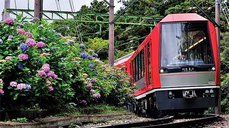 アジサイに彩られる「アレグラ号」〜箱根登山鉄道3000形