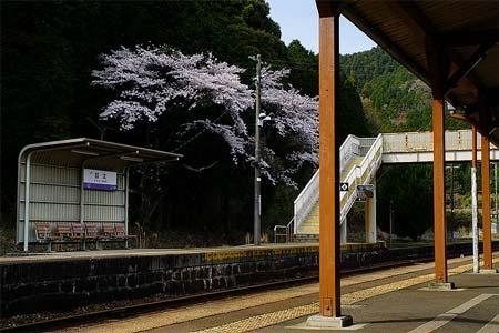 REPORTJR関西本線 桜の駅めぐり旅